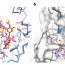 X-Probe Publication: MraY–antibiotic complex reveals details of tunicamycin mode of action